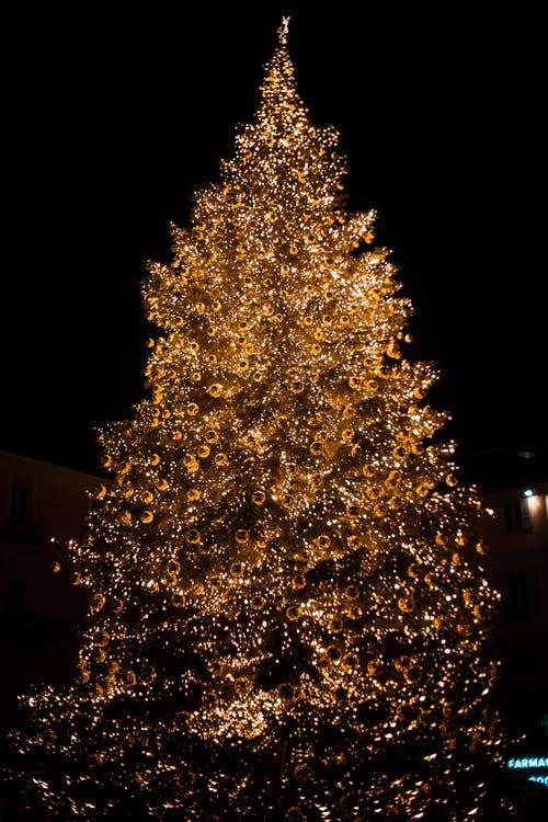 blog/artifacts/tree lighting.jpeg